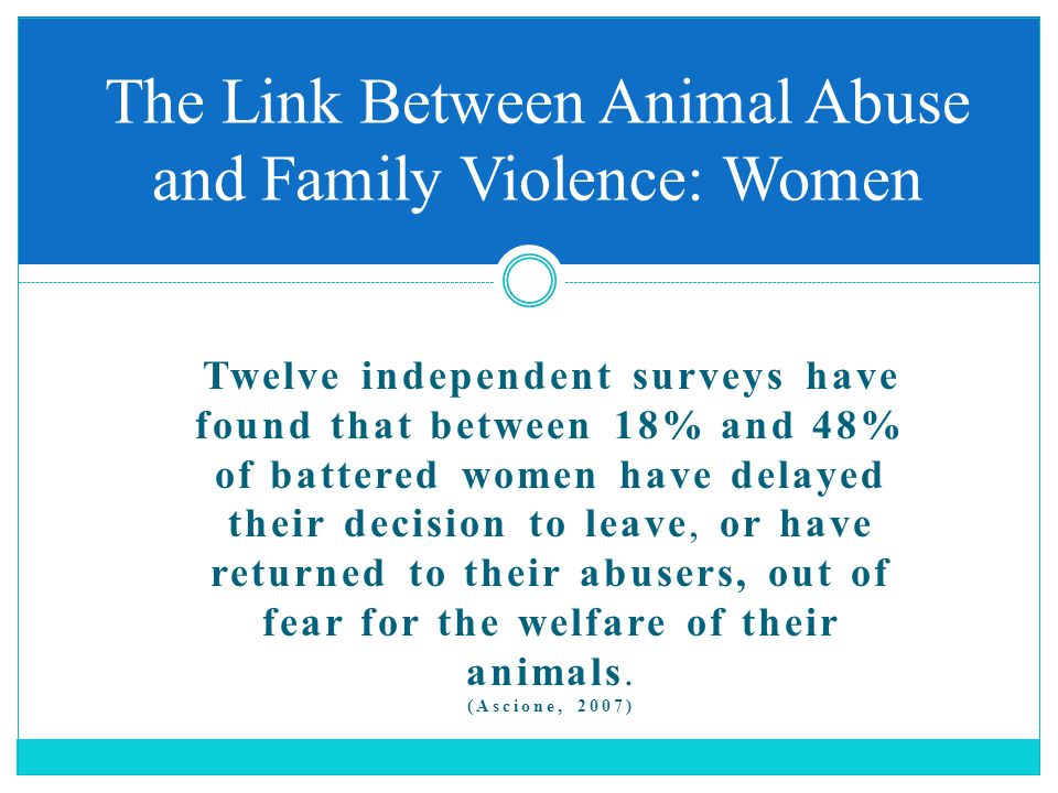 Twelve independent surveys have found that between 18% and 48% of battered women have delayed their decision to leave, or have returned to their abusers, out of fear for the welfare of their animals.