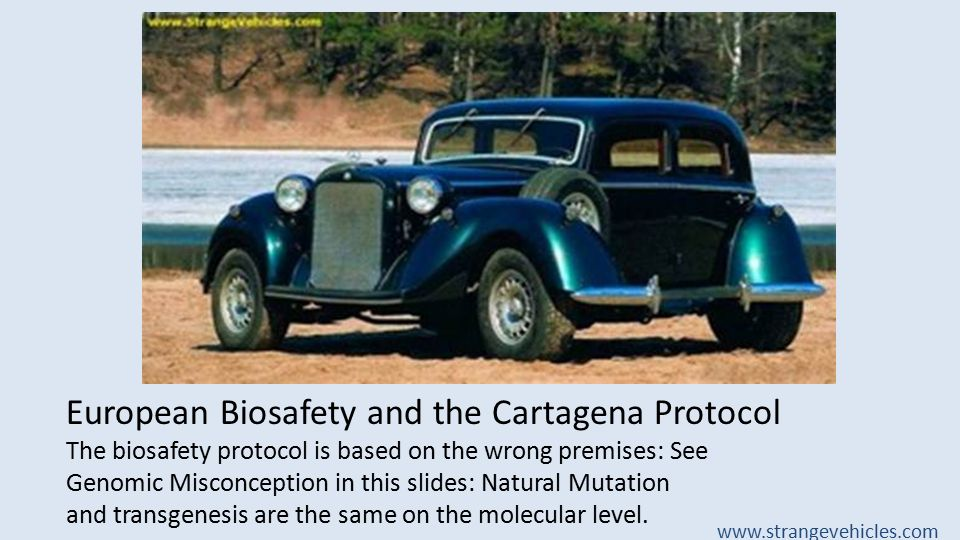 European Biosafety and the Cartagena Protocol The biosafety protocol is based on the wrong premises: See Genomic Misconception in this slides: Natural Mutation and transgenesis are the same on the molecular level.
