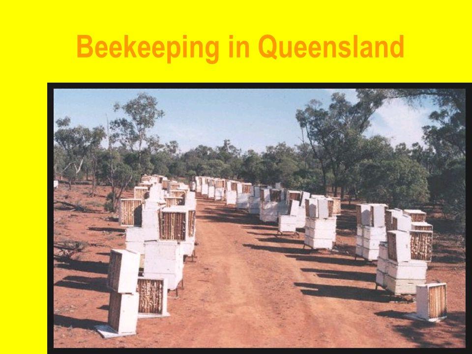 Beekeeping in Queensland