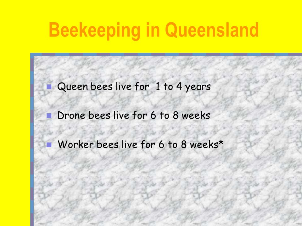 Queen bees live for 1 to 4 years Drone bees live for 6 to 8 weeks Worker bees live for 6 to 8 weeks* Beekeeping in Queensland