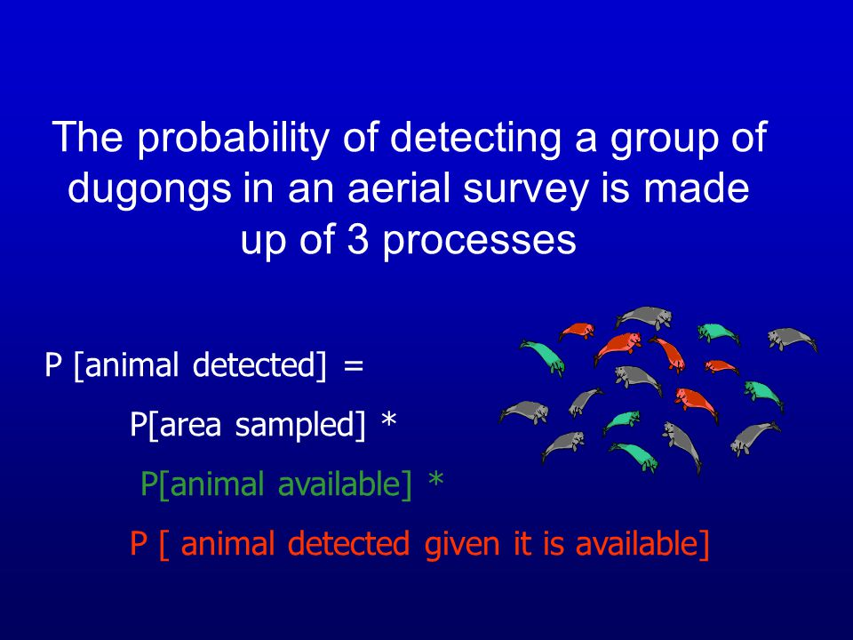 The probability of detecting a group of dugongs in an aerial survey is made up of 3 processes P [animal detected] = P[area sampled] * P[animal availab