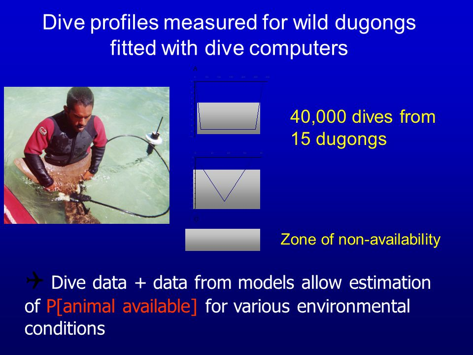 Zone of non-availability Dive profiles measured for wild dugongs fitted with dive computers 40,000 dives from 15 dugongs  Dive data + data from model