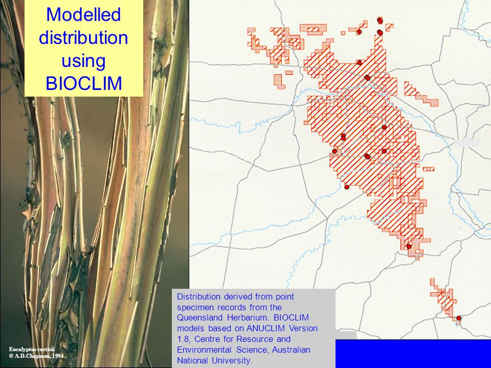Modelled distribution using BIOCLIM Eucalyptus curtisii © A.D.Chapman, 1994 Distribution derived from point specimen records from the Queensland Herbarium.