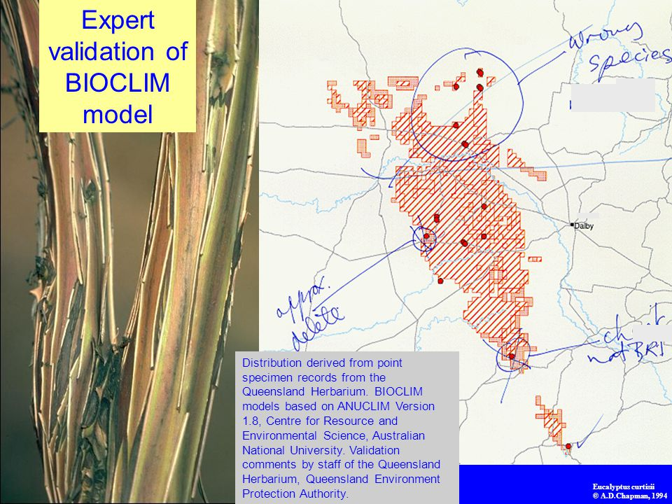 Expert validation of BIOCLIM model Distribution derived from point specimen records from the Queensland Herbarium. BIOCLIM models based on ANUCLIM Ver