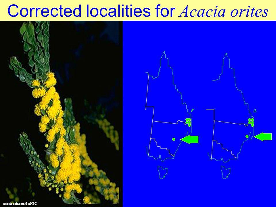 Corrected localities for Acacia orites Acacia acinacea © ANBG