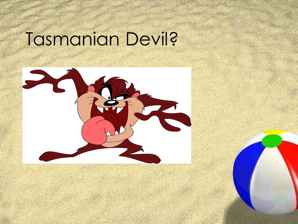 Tasmanian Devil?