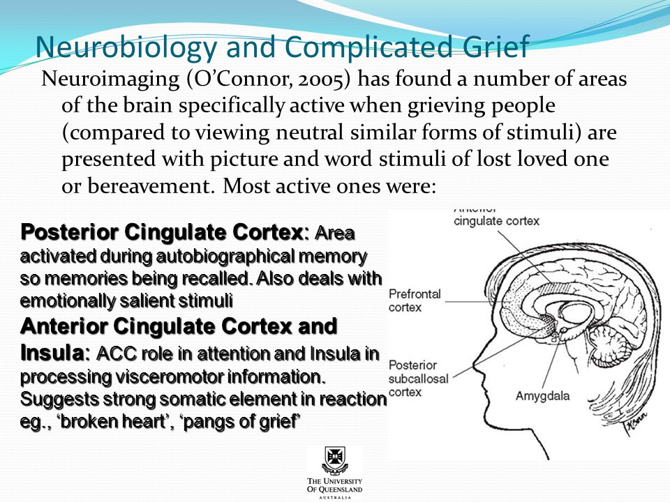 Neurobiology and Complicated Grief Neuroimaging (O'Connor, 2005) has found a number of areas of the brain specifically active when grieving people (co
