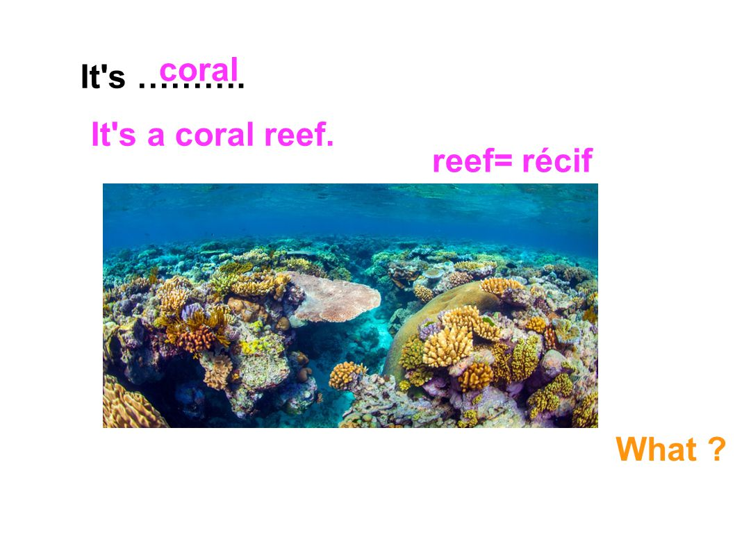 It's ………. coral What ? It's a coral reef. reef= récif