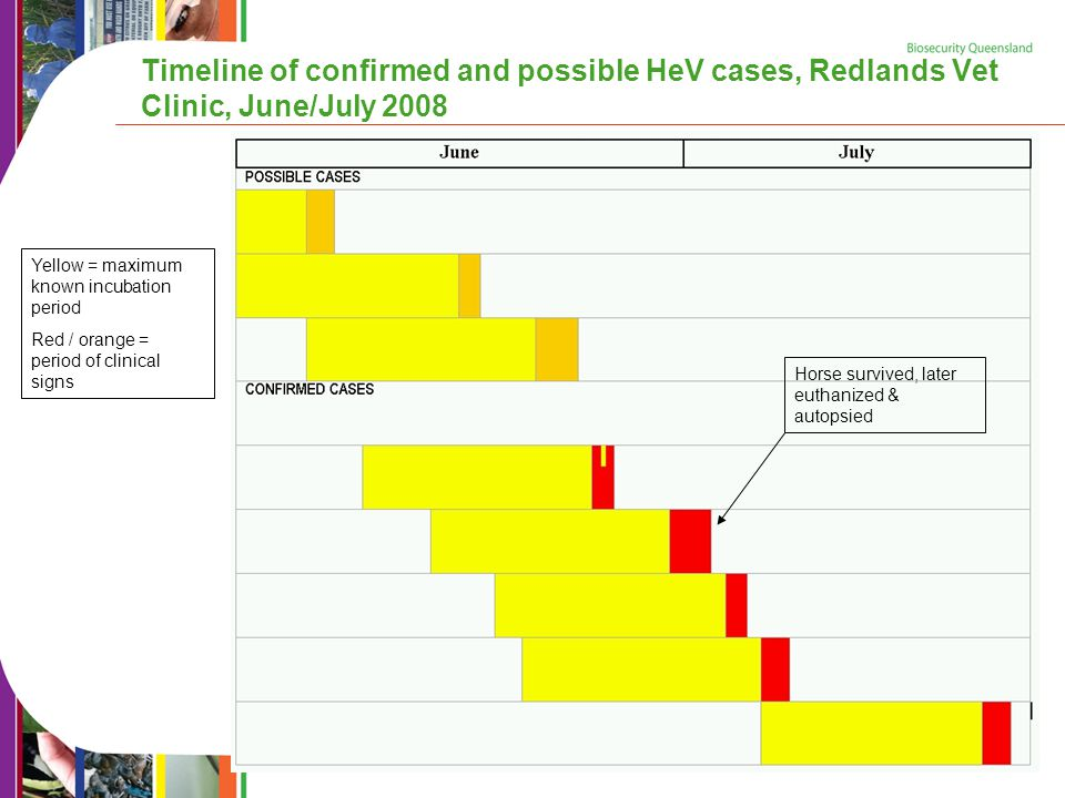 Timeline of confirmed and possible HeV cases, Redlands Vet Clinic, June/July 2008 Yellow = maximum known incubation period Red / orange = period of clinical signs Horse survived, later euthanized & autopsied