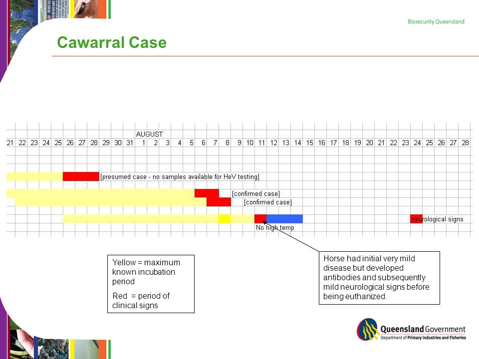 Cawarral Case Yellow = maximum known incubation period Red = period of clinical signs Horse had initial very mild disease but developed antibodies and subsequently mild neurological signs before being euthanized.