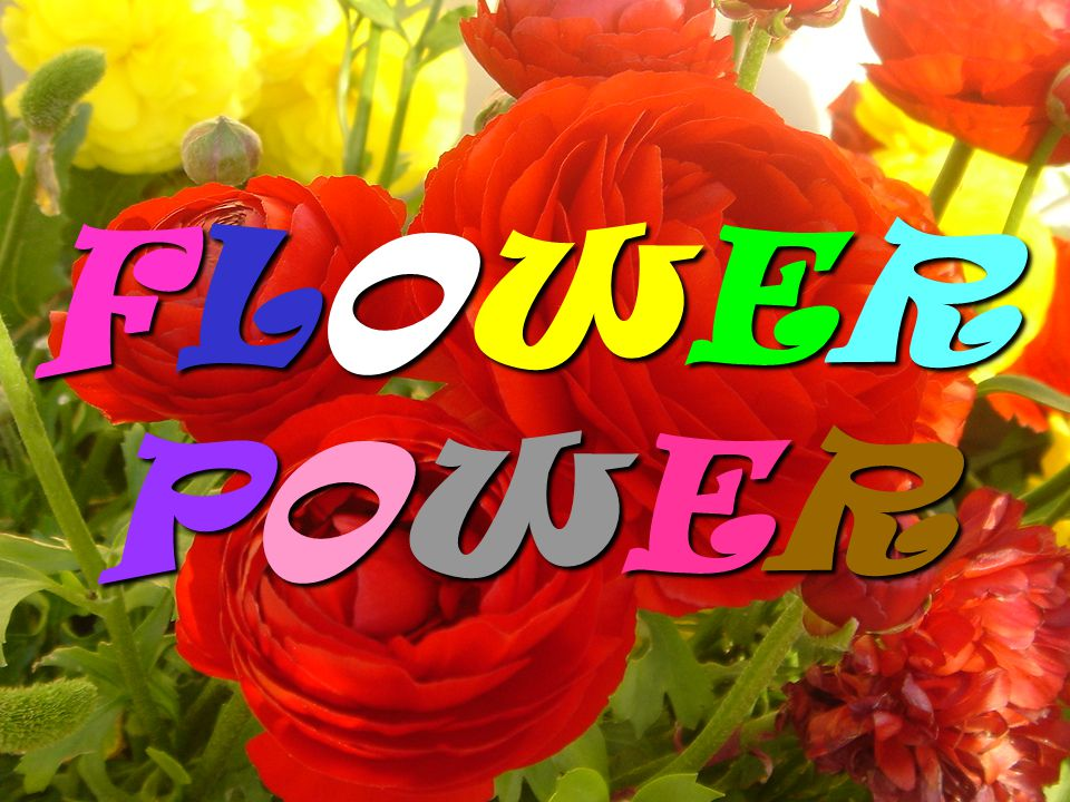 FLOWERPOWERFLOWERPOWERFLOWERPOWERFLOWERPOWER