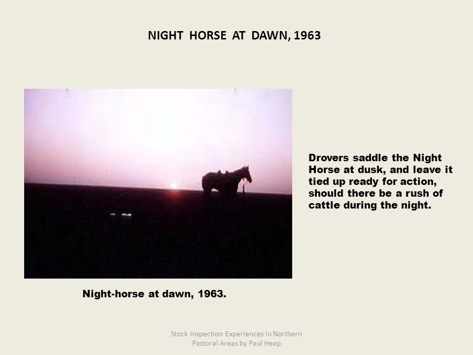 Drovers saddle the Night Horse at dusk, and leave it tied up ready for action, should there be a rush of cattle during the night. Night-horse at dawn,