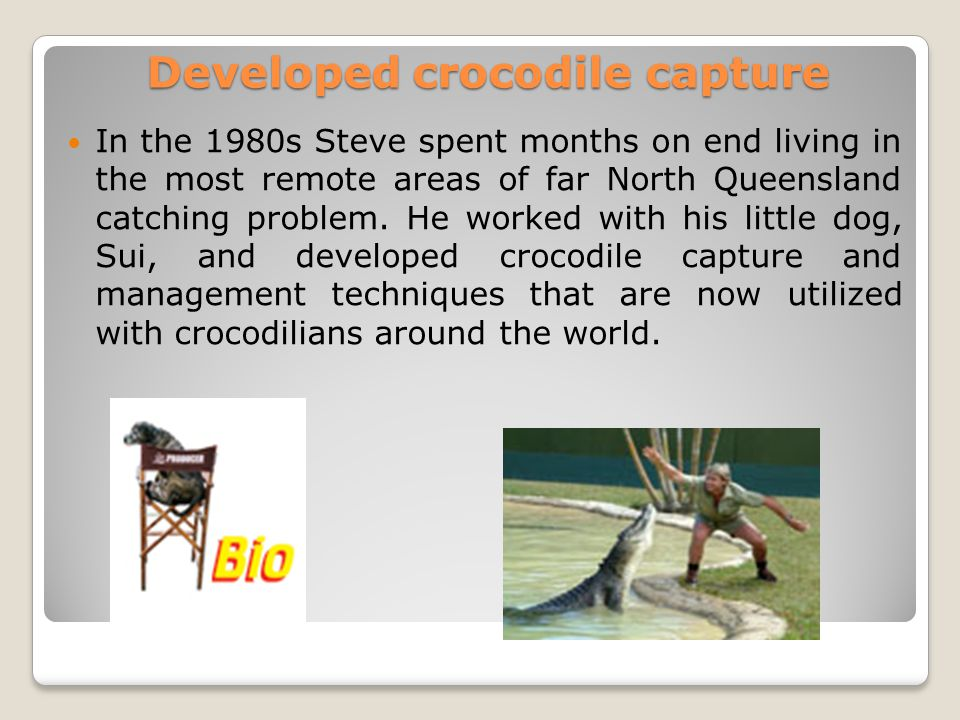 Developed crocodile capture In the 1980s Steve spent months on end living in the most remote areas of far North Queensland catching problem.
