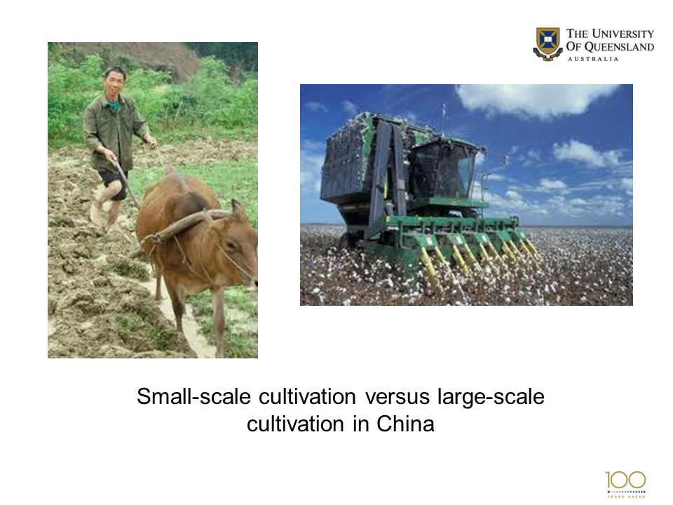 Small-scale cultivation versus large-scale cultivation in China