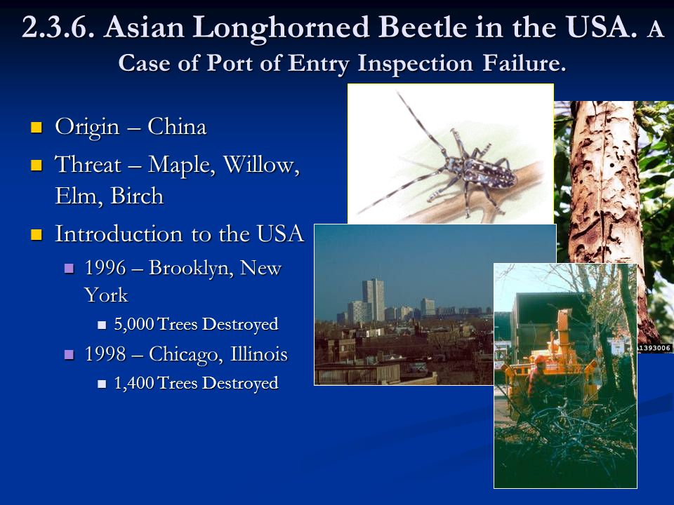 2.3.6. Asian Longhorned Beetle in the USA. A Case of Port of Entry Inspection Failure.