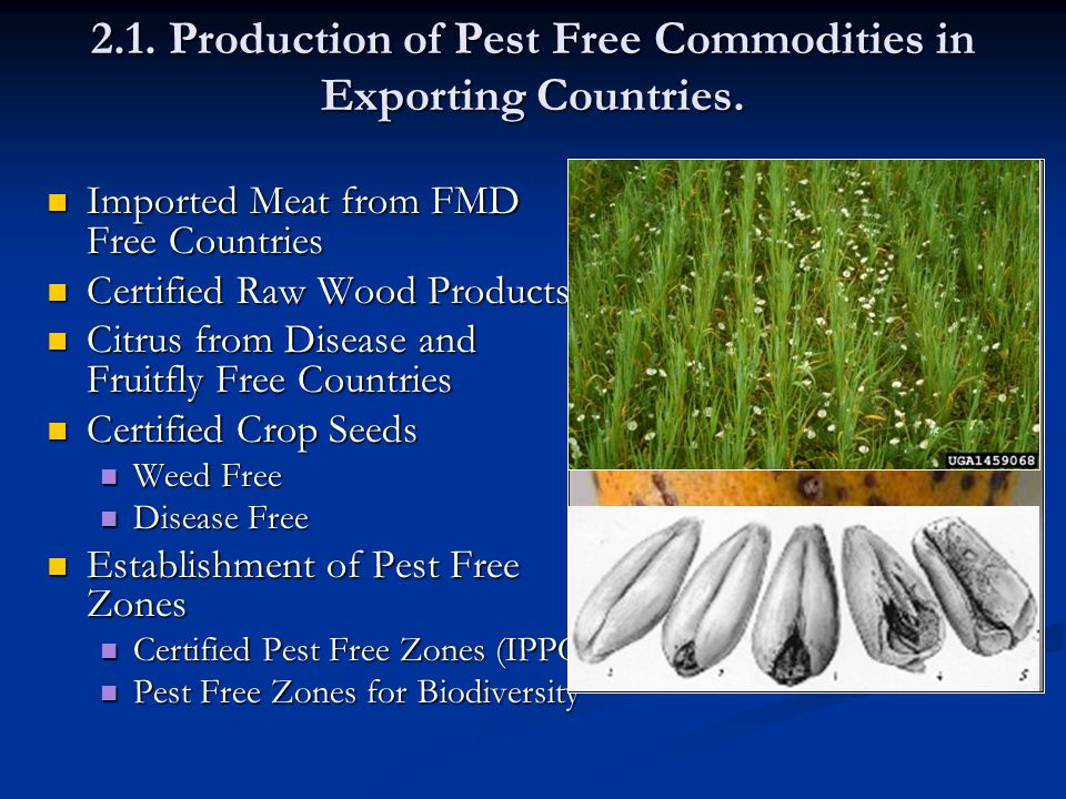 2.1. Production of Pest Free Commodities in Exporting Countries.
