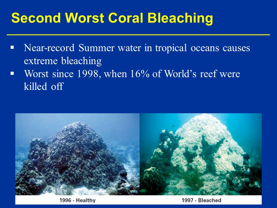   Near-record Summer water in tropical oceans causes extreme bleaching   Worst since 1998, when 16% of World's reef were killed off Second Worst Coral Bleaching