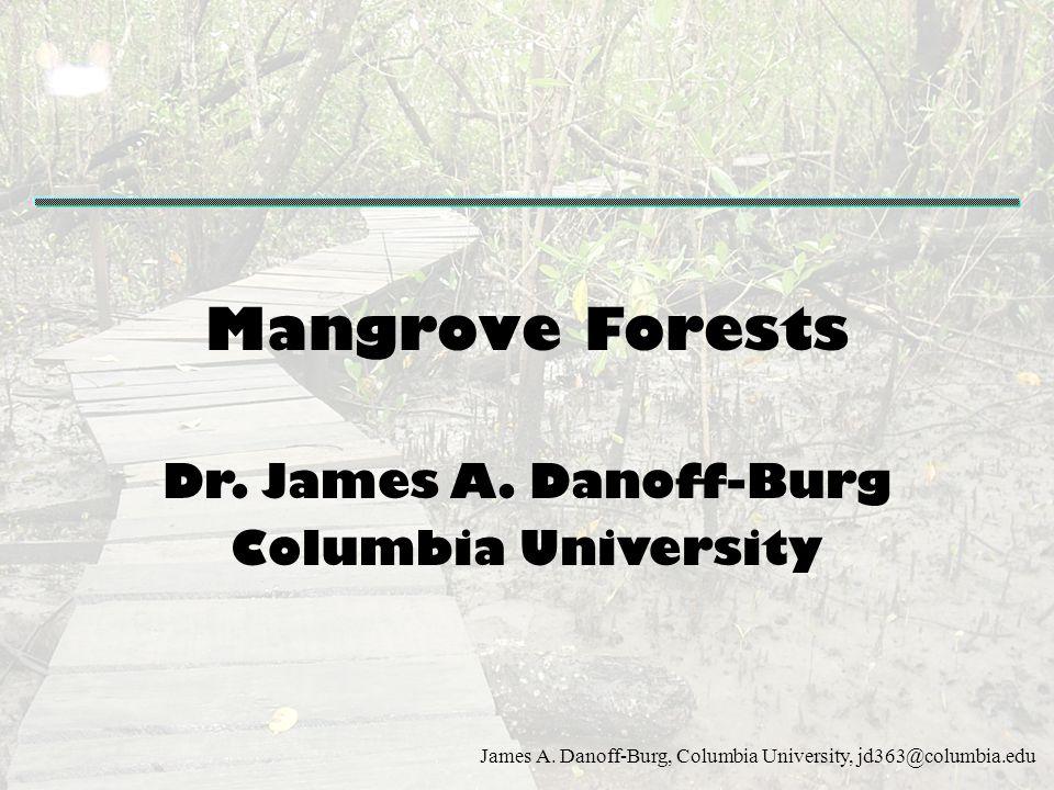 James A. Danoff-Burg, Columbia University, jd363@columbia.edu Mangrove Forests Dr. James A. Danoff-Burg Columbia University