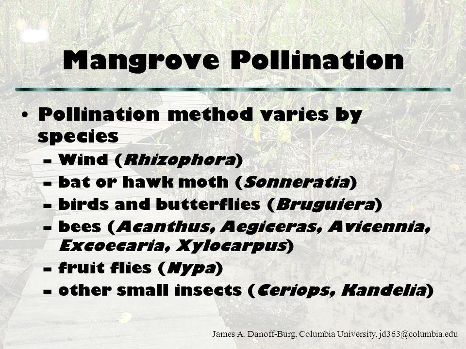 James A. Danoff-Burg, Columbia University, jd363@columbia.edu Mangrove Pollination Pollination method varies by species –Wind (Rhizophora) –bat or haw