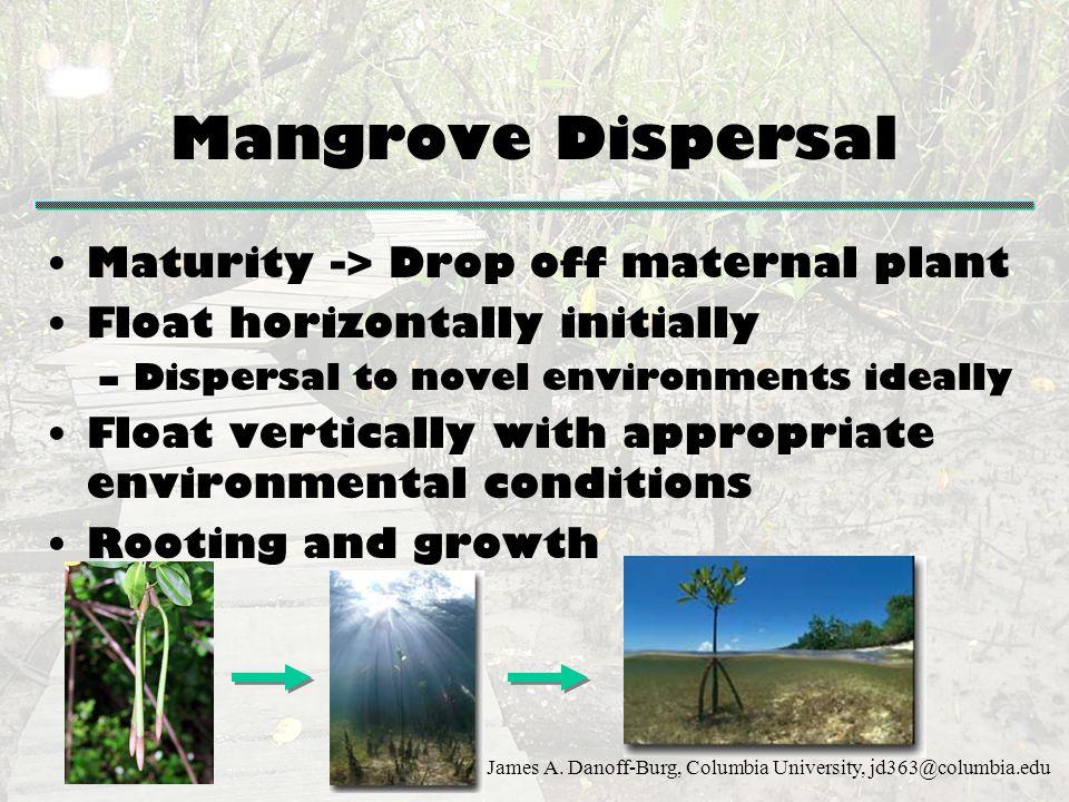 James A. Danoff-Burg, Columbia University, jd363@columbia.edu Mangrove Dispersal Maturity -> Drop off maternal plant Float horizontally initially –Dis