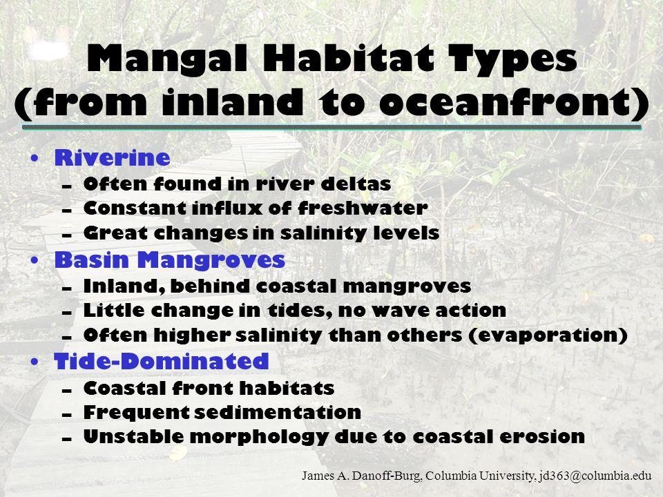 James A. Danoff-Burg, Columbia University, jd363@columbia.edu Mangal Habitat Types (from inland to oceanfront) Riverine –Often found in river deltas –
