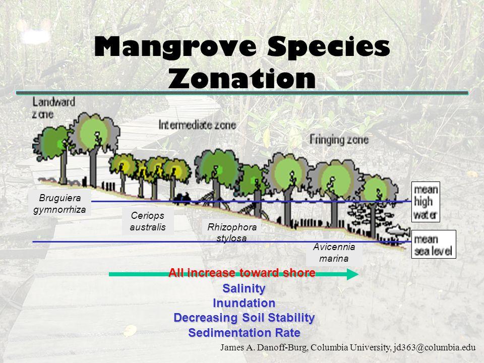 James A. Danoff-Burg, Columbia University, jd363@columbia.edu Mangrove Species Zonation Bruguiera gymnorrhiza Ceriops australis Avicennia marina Rhizo