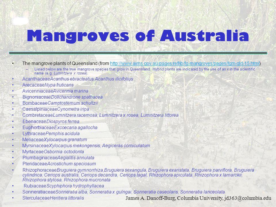James A. Danoff-Burg, Columbia University, jd363@columbia.edu Mangroves of Australia The mangrove plants of Queensland (from http://www.aims.gov.au/pa