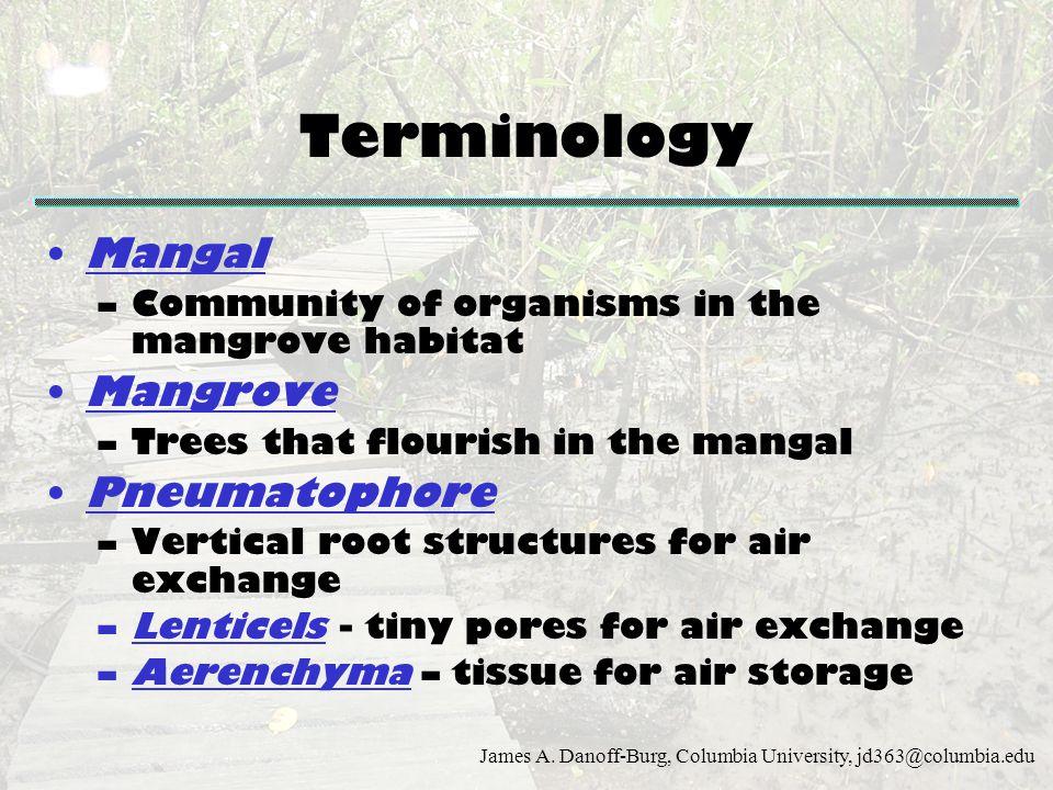 James A. Danoff-Burg, Columbia University, jd363@columbia.edu Terminology Mangal –Community of organisms in the mangrove habitat Mangrove –Trees that