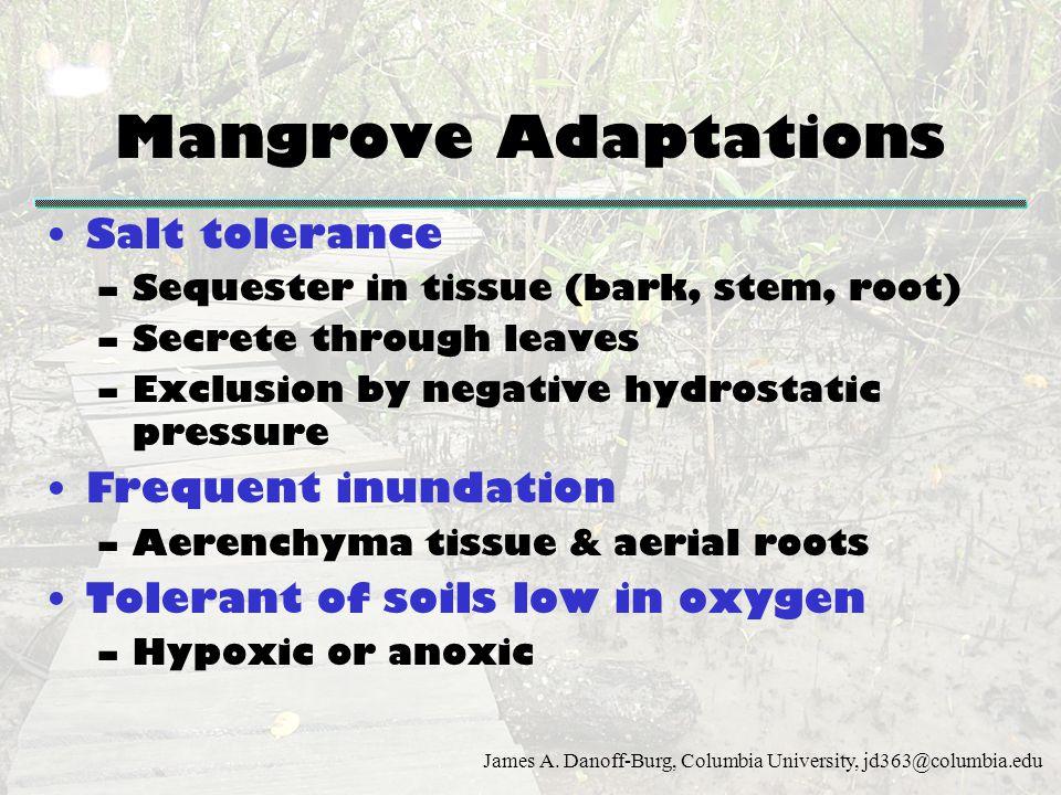 James A. Danoff-Burg, Columbia University, jd363@columbia.edu Mangrove Adaptations Salt tolerance –Sequester in tissue (bark, stem, root) –Secrete thr
