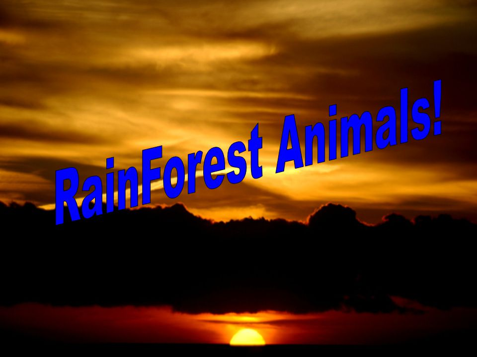Project Biome By: Steven P., Chris M., Levi M., Jordon H., and Kyle R. Rain Forest