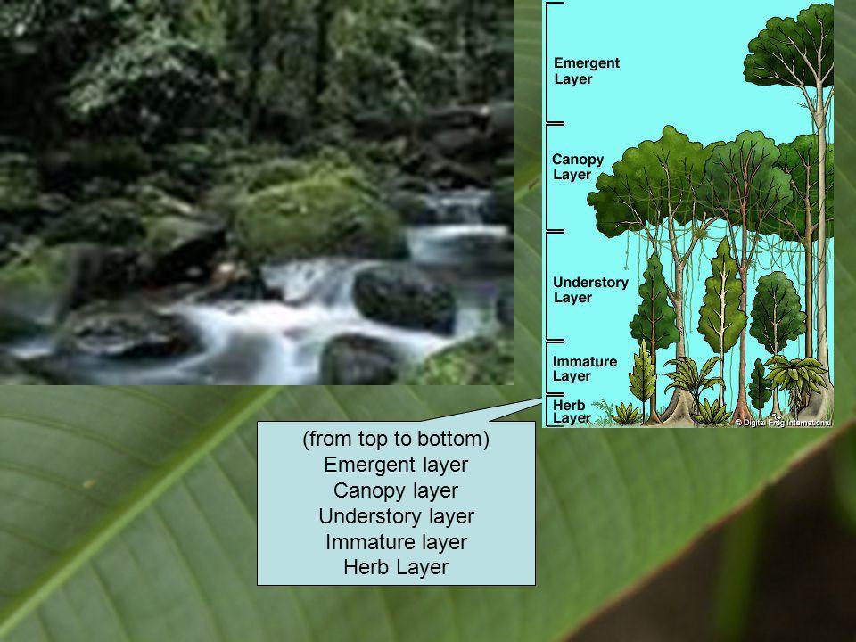 Rainforest pics
