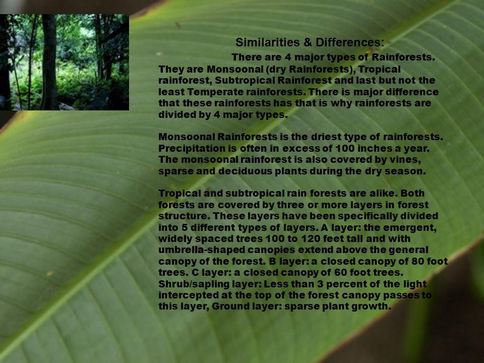 Lush rainforest of the world………