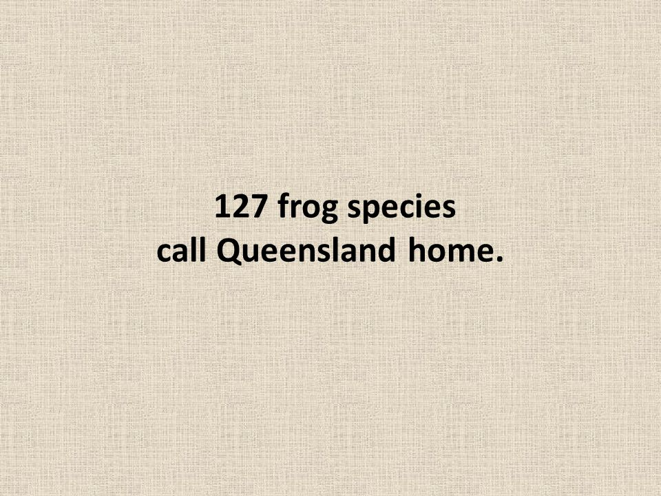 127 frog species call Queensland home.