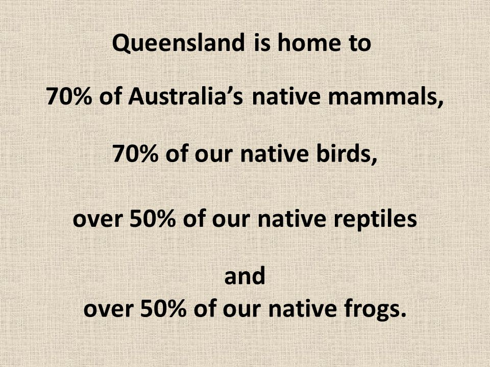 Queensland is home to 70% of Australia's native mammals, 70% of our native birds, over 50% of our native reptiles and over 50% of our native frogs.