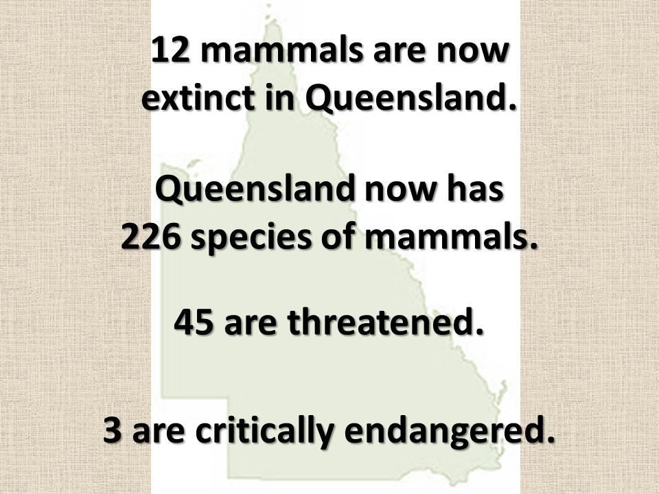 12 mammals are now extinct in Queensland. Queensland now has 226 species of mammals. 45 are threatened. 3 are critically endangered.