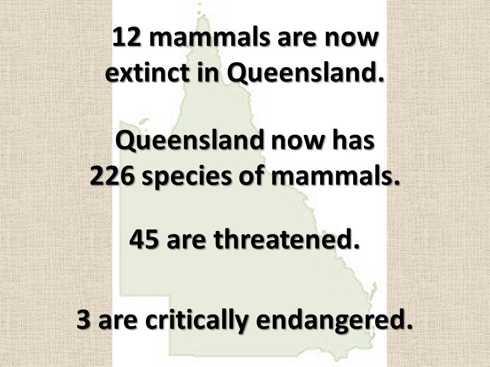 630 species of birds are found in Queensland.