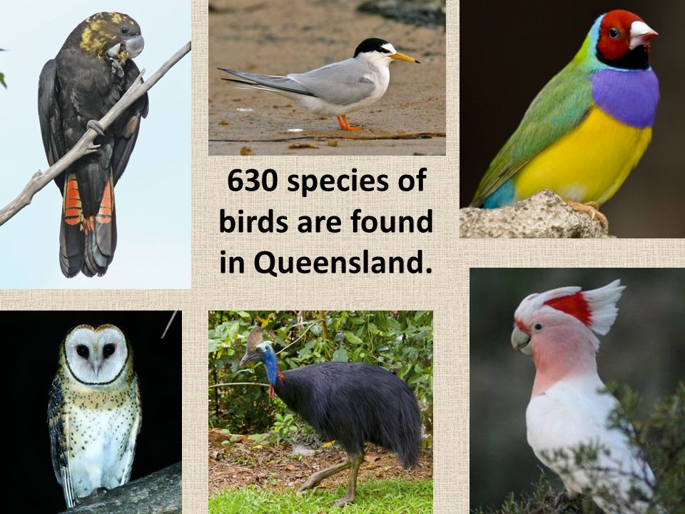 1 is extinct ‒ The Paradise Parrot.