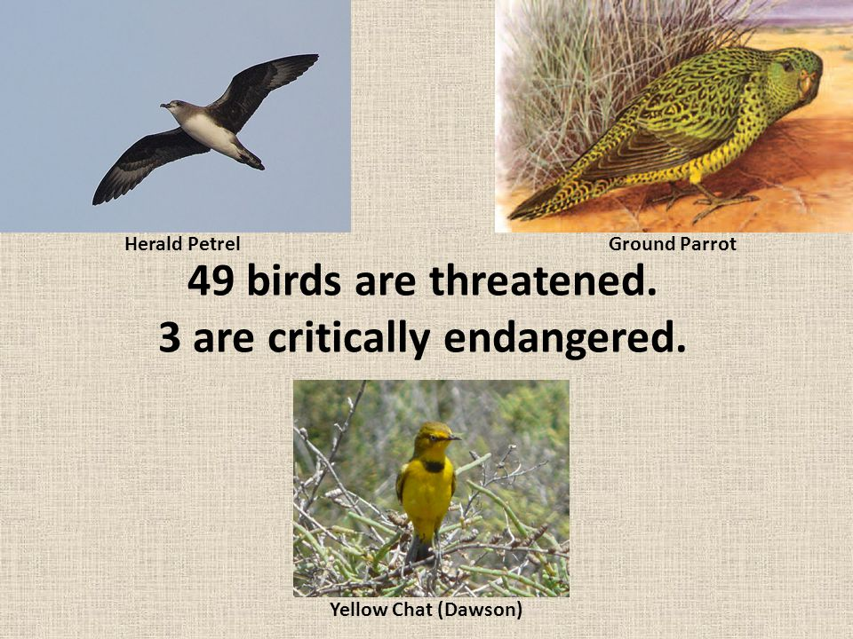 Why so many threatened species? Habitat loss due to land clearing and land fragmentation #1 REASON?