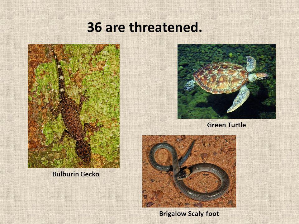 4 are critically endangered. Hawksbill Turtle Leatherback Turtle Nangur Spiny Skink Retro Slider