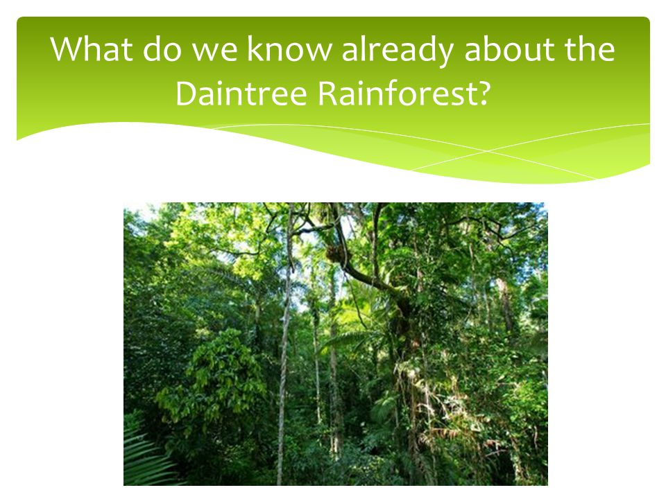 What do we know already about the Daintree Rainforest?