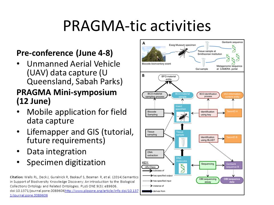 PRAGMA-tic activities Pre-conference (June 4-8) Unmanned Aerial Vehicle (UAV) data capture (U Queensland, Sabah Parks) PRAGMA Mini-symposium (12 June) Mobile application for field data capture Lifemapper and GIS (tutorial, future requirements) Data integration Specimen digitization Citation: Walls RL, Deck J, Guralnick R, Baskauf S, Beaman R, et al.