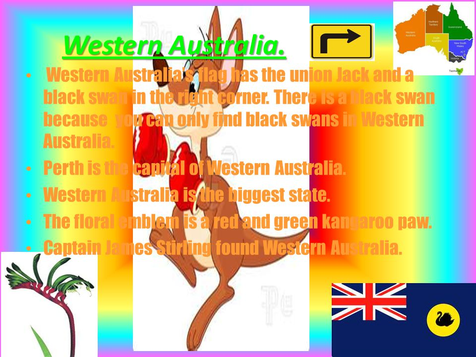 Western Australia. Western Australia's flag has the union Jack and a black swan in the right corner. There is a black swan because you can only find b