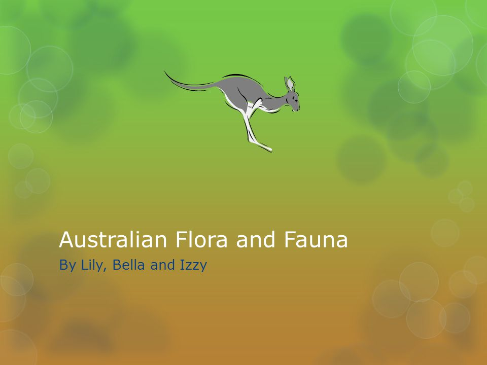 Australian Flora and Fauna By Lily, Bella and Izzy
