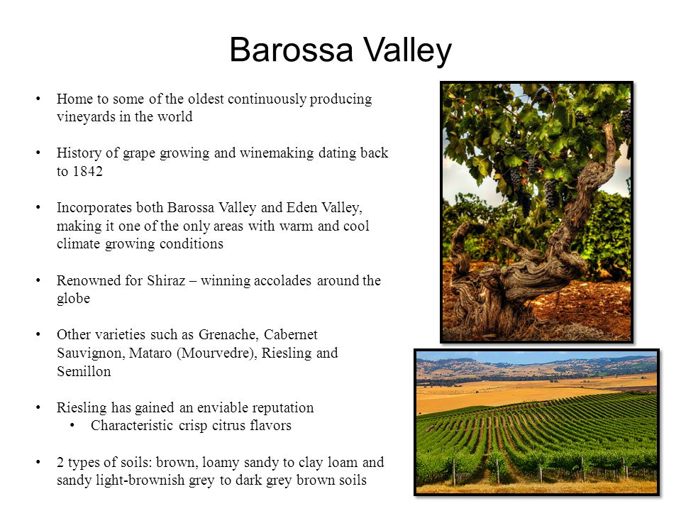 Barossa Valley Home to some of the oldest continuously producing vineyards in the world History of grape growing and winemaking dating back to 1842 In