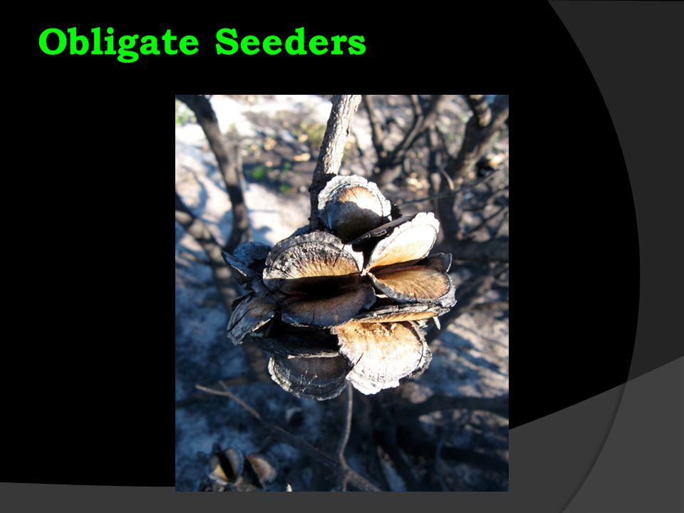 Obligate Seeders