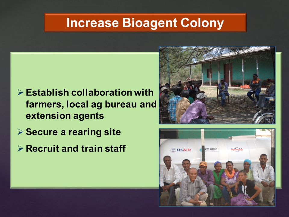 Increase Bioagent Colony  Establish collaboration with farmers, local ag bureau and extension agents  Secure a rearing site  Recruit and train staff