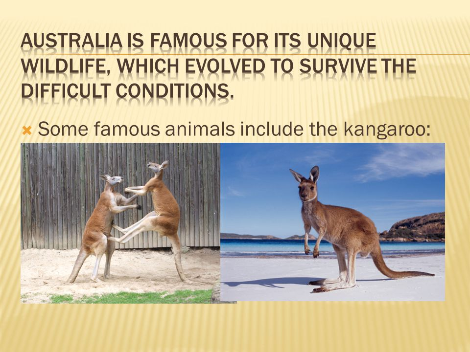  Some famous animals include the kangaroo: