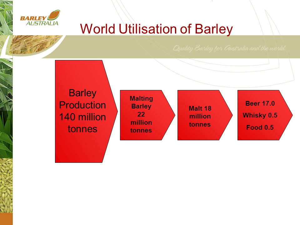 World Utilisation of Barley Barley Production 140 million tonnes Malting Barley 22 million tonnes Malt 18 million tonnes Beer 17.0 Whisky 0.5 Food 0.5