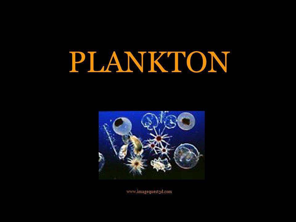 PLANKTON www.imagequest3d.com