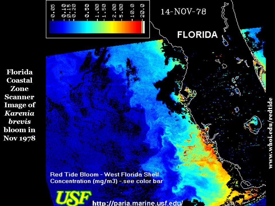 www.whoi.edu/redtide Florida Coastal Zone Scanner Image of Karenia brevis bloom in Nov 1978